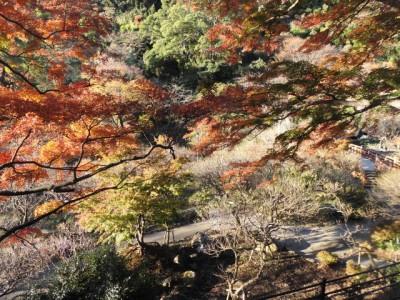熱海梅園残るに紅葉