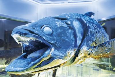 毎日新聞夕刊にて開業10周年記念「沼津港深海水族館タイアップ宿泊プラン」が紹介されました。