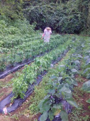 ミクラス契約農家の完全無農薬栽培『谷口ファーム』のご紹介